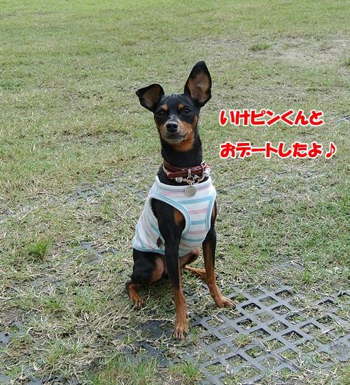 DSC_7355.jpg
