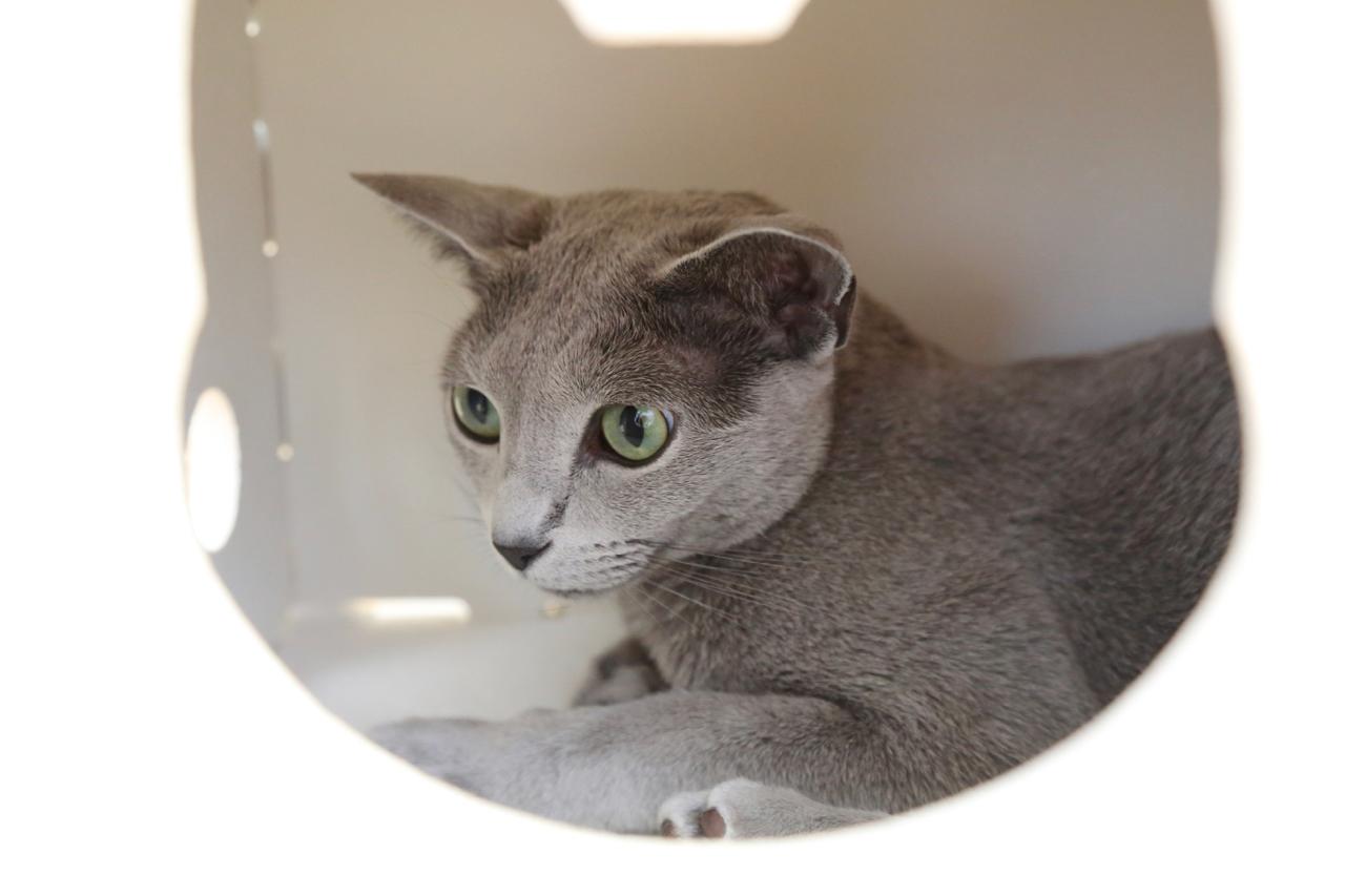 エマ、猫トンネル