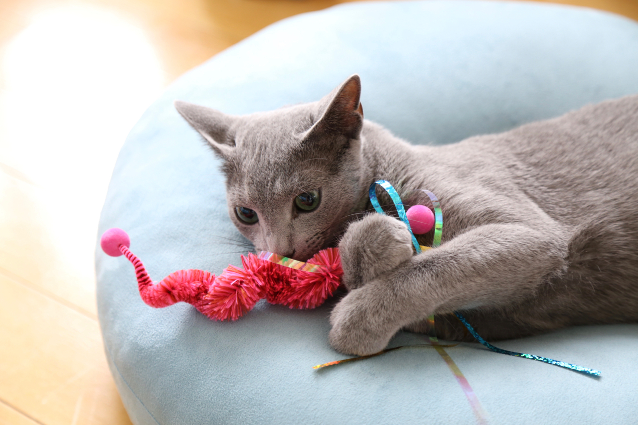 テオとおもちゃ