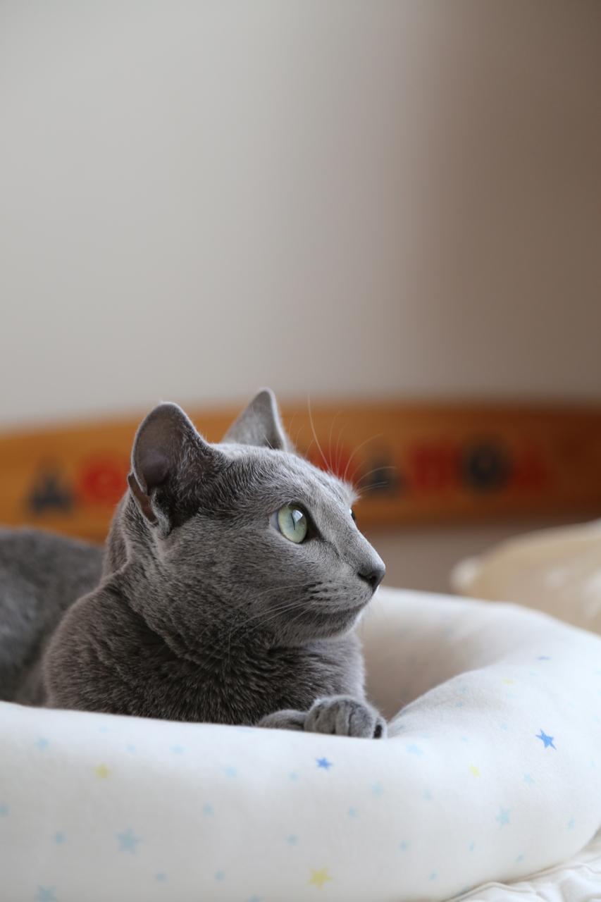 ベッド横向き