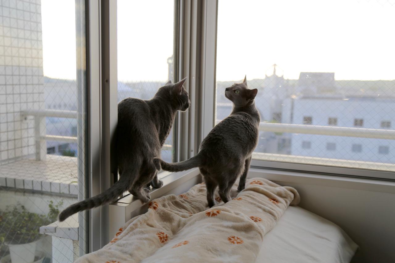 アンテオ窓辺