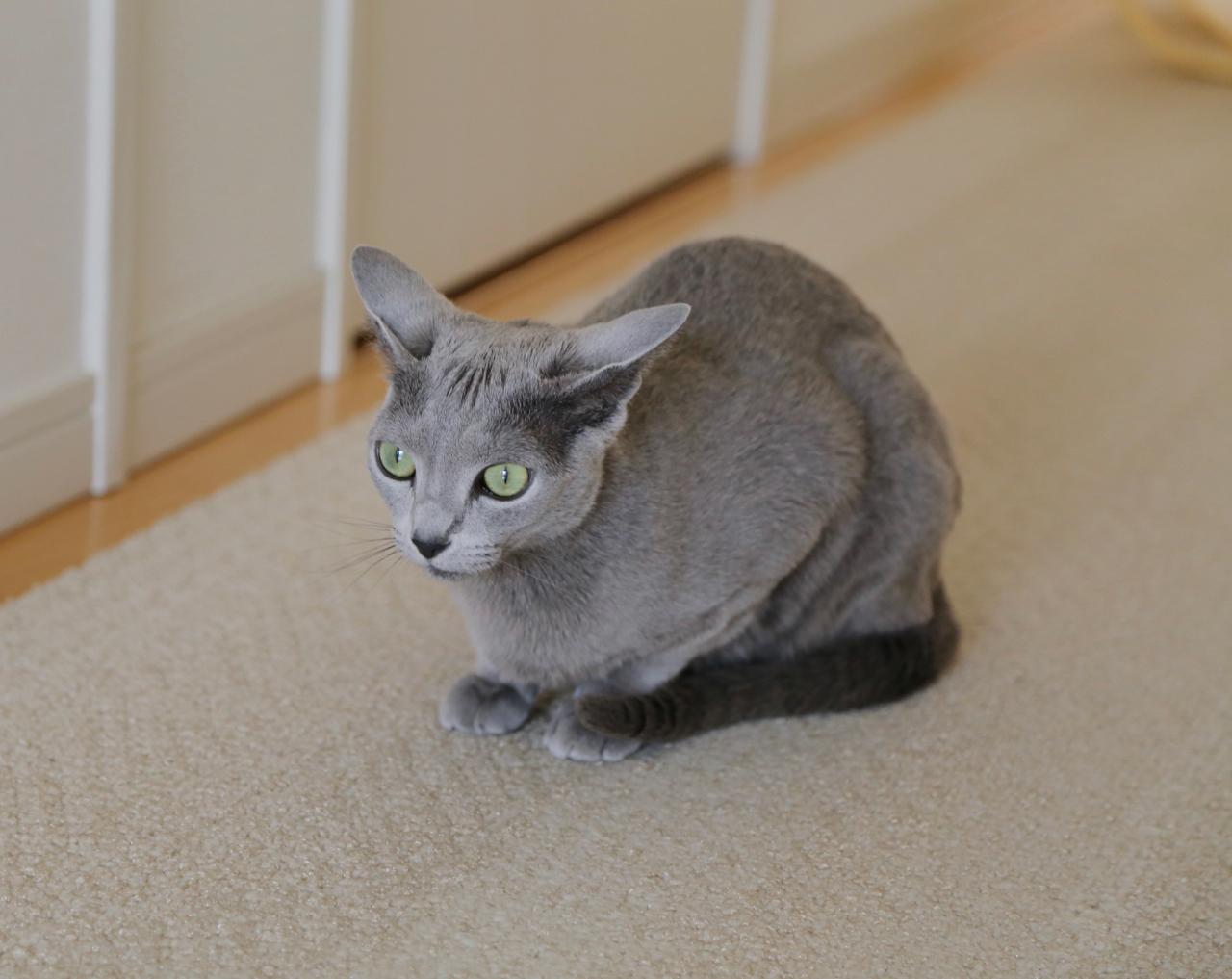 エマイカ耳