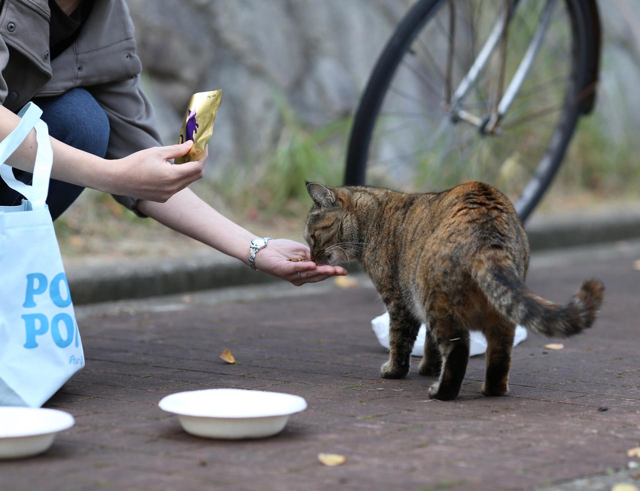 手から食べる