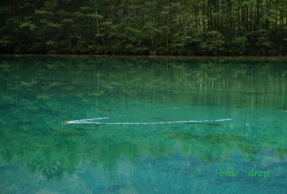 翡翠色の池*
