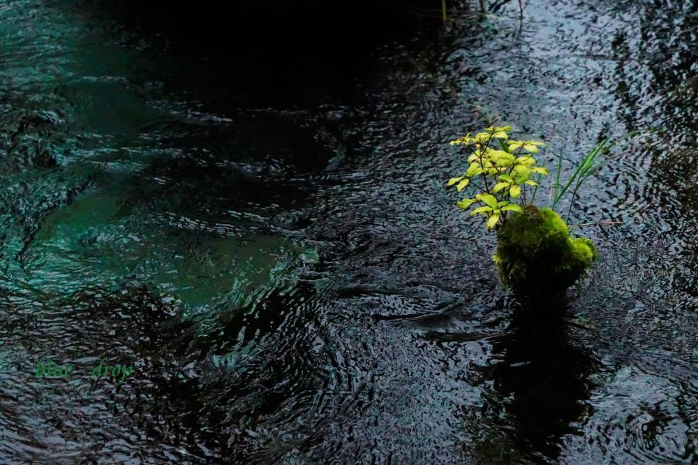 翠色の流れ*