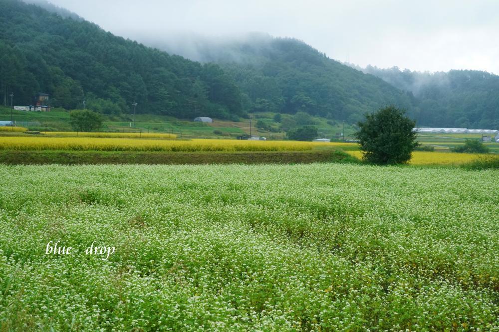 蕎麦のある風景*