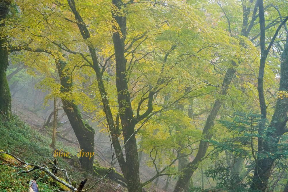 黄色い森*