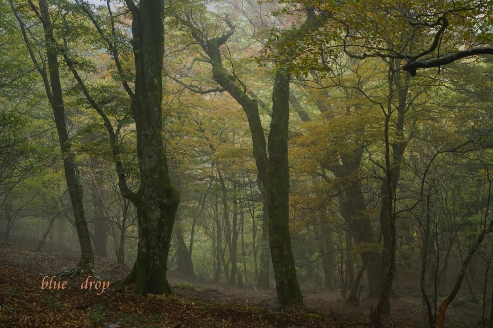 雨降りの森*