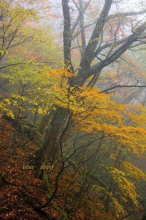 霧に浮かぶ*