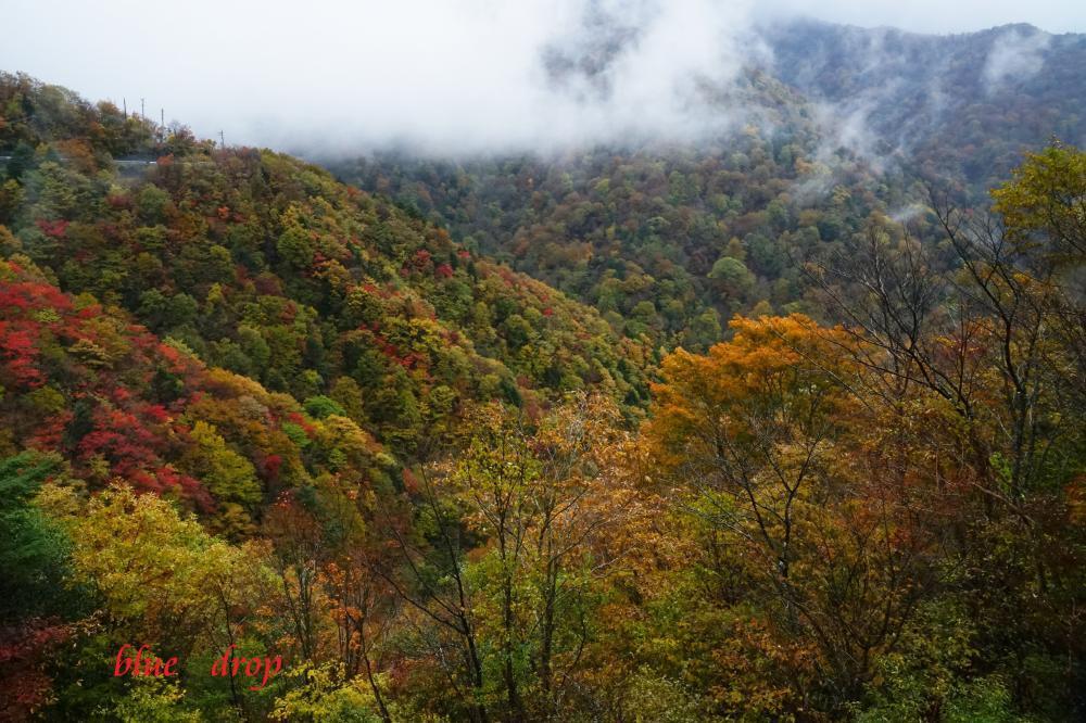 紅葉の山*