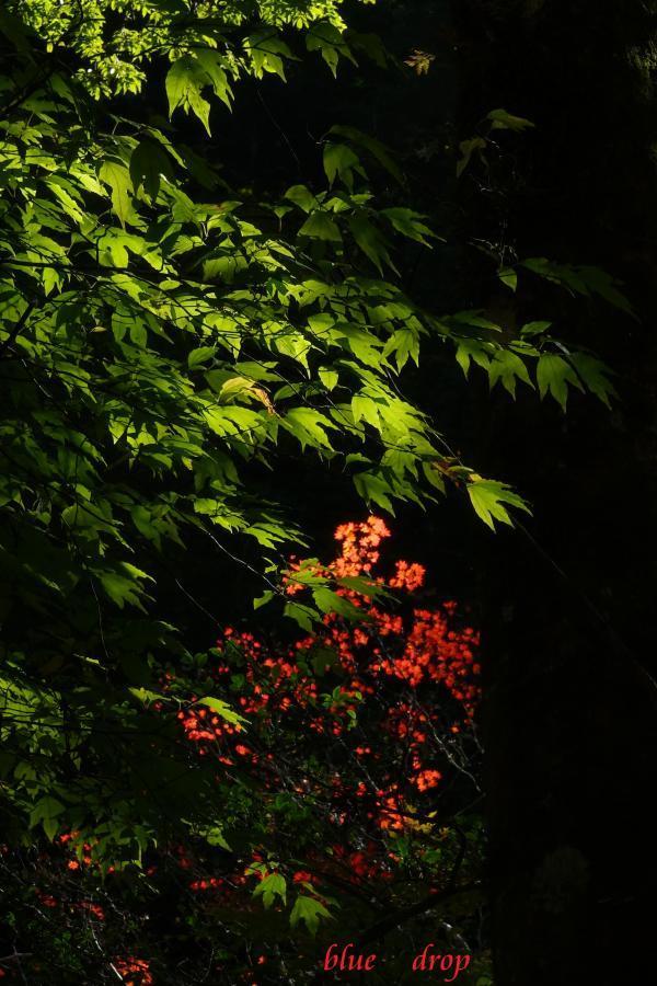 紅葉の始まり*