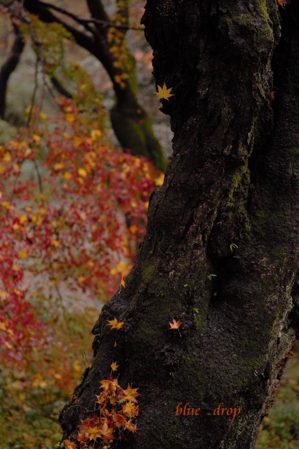 散りゆく葉
