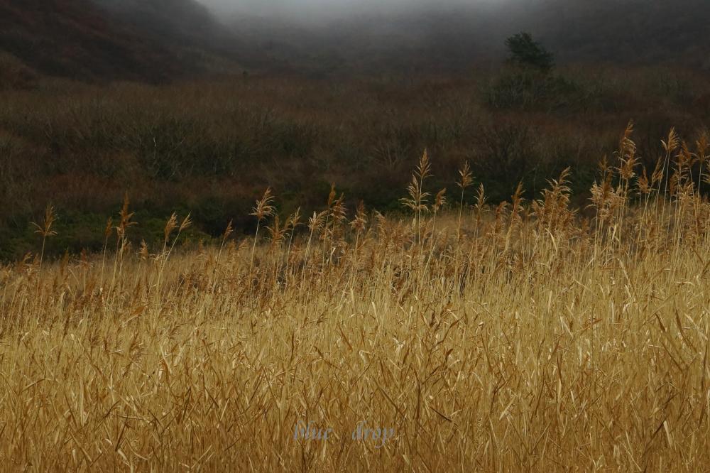 金色の草原*