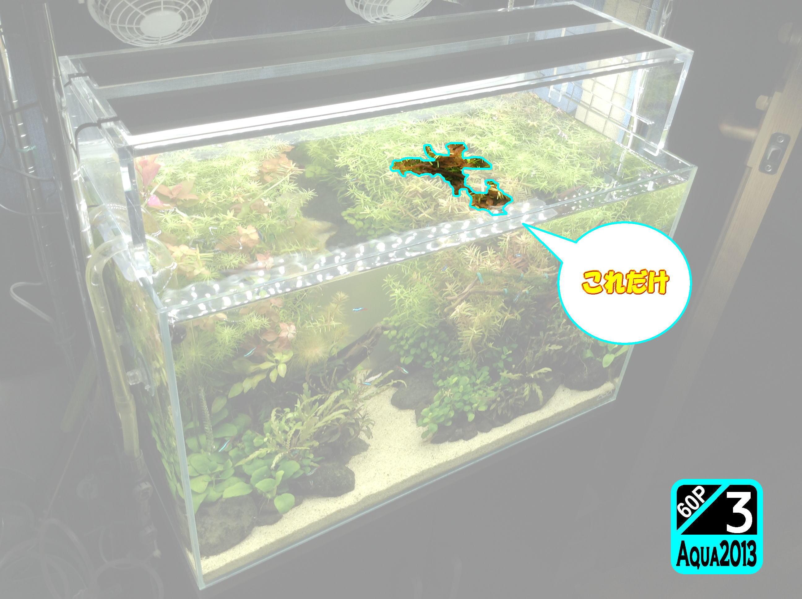 Aqua2016_0821c_002.jpg