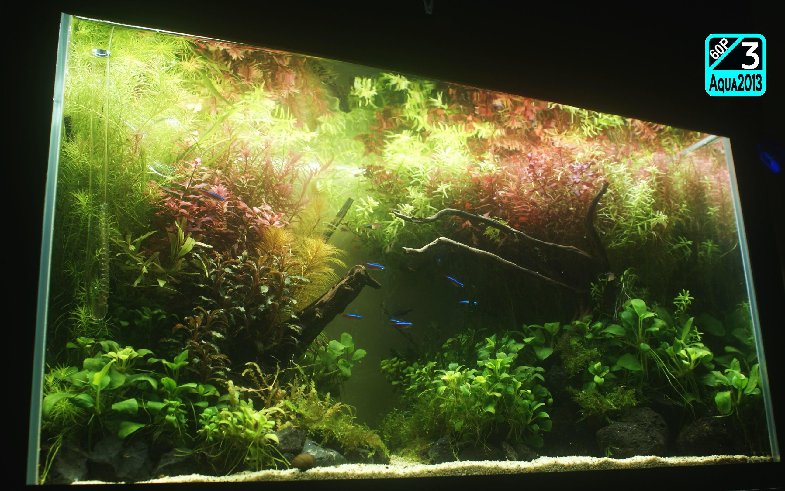 Aqua2016_1003c_009.jpg