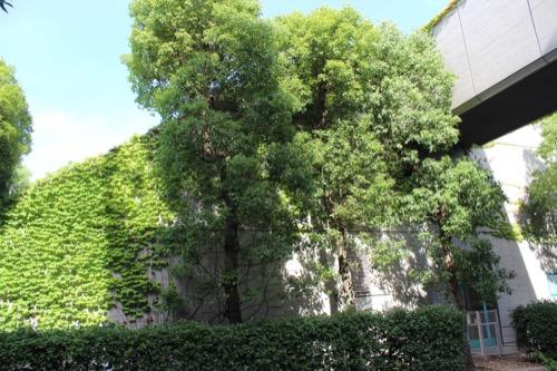 0153:芦屋市民センター 別館への空中回廊