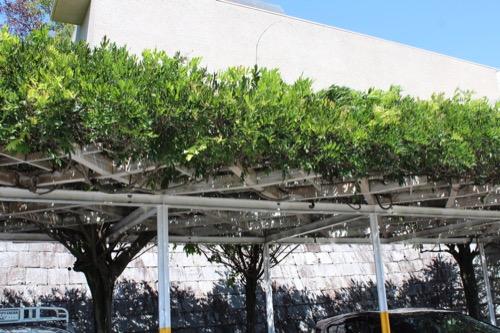 0156:松柏美術館 藤棚となっている駐車場アーケード
