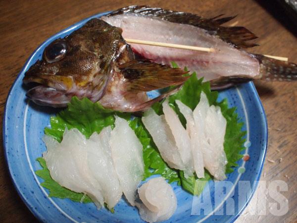 カサゴの料理の仕方 刺身 姿造り 関西ではガシラ