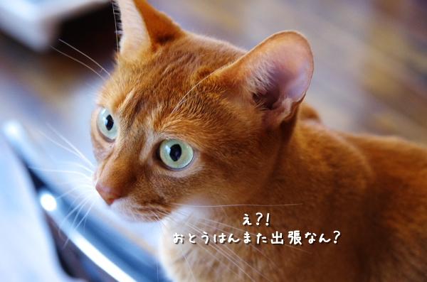 kako-nyqWU596I8nBx5d4.jpg