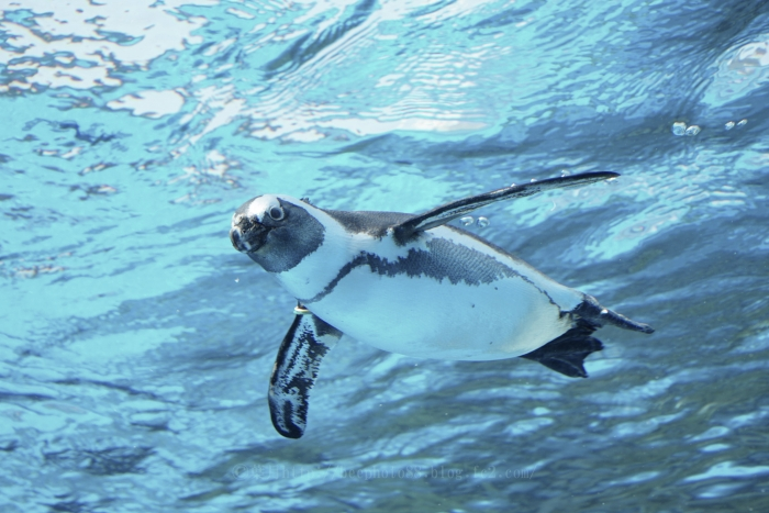 ペンギン0123