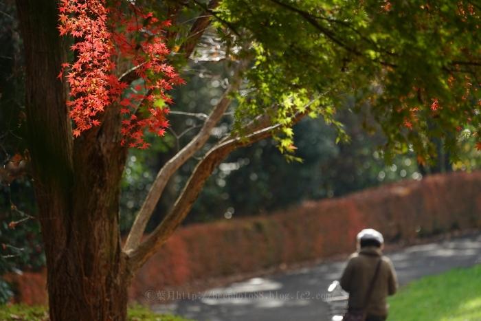 桜ヶ丘公園 (2)