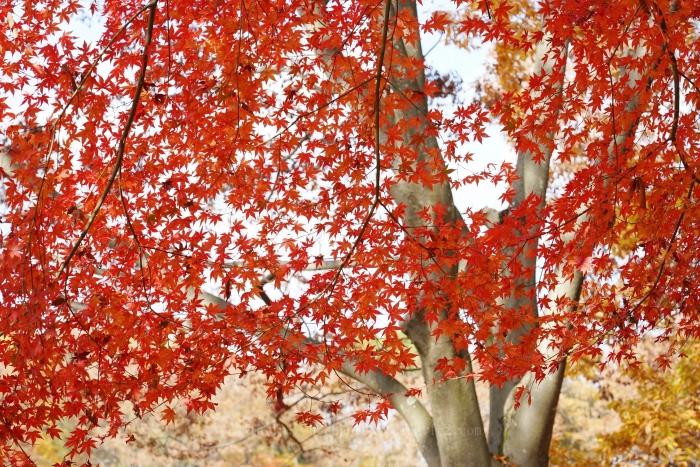 桜ヶ丘公園8271