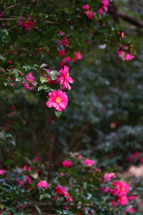 桜ヶ丘公園8253