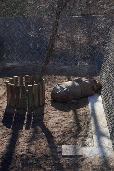 3ブログ_動物園_冬の光9886