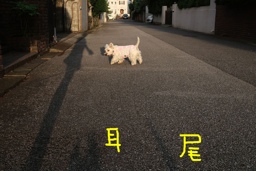 honyarakamatarinaasasande3.jpg