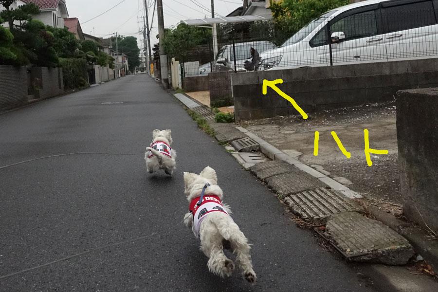 nureromenmotanosiikedochiga3.jpg