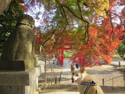 神社の紅葉 (3)