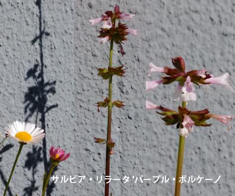 201605132.jpg
