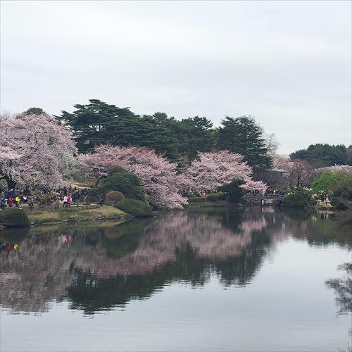 ゆうブログケロブログ花見と春 (7)