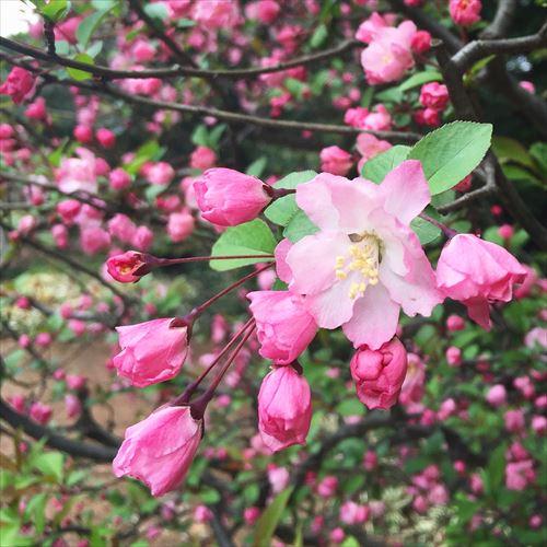 ゆうブログケロブログ花見と春 (9)