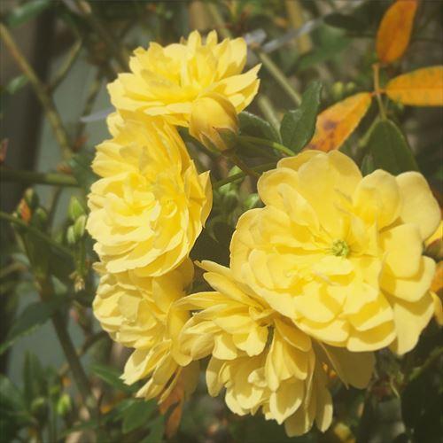 ゆうブログケロブログ花見と春 (10)