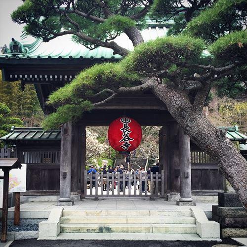 ゆうブログヶロブログ鎌倉2016春 (3)