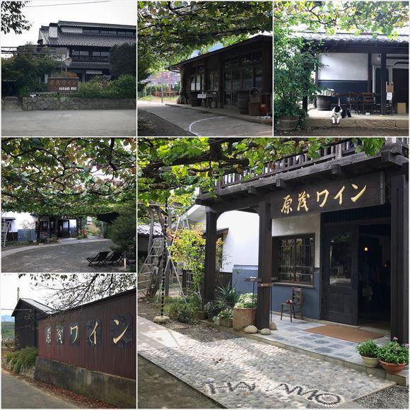 ゆうブログケロブログ勝沼2016秋 (14)