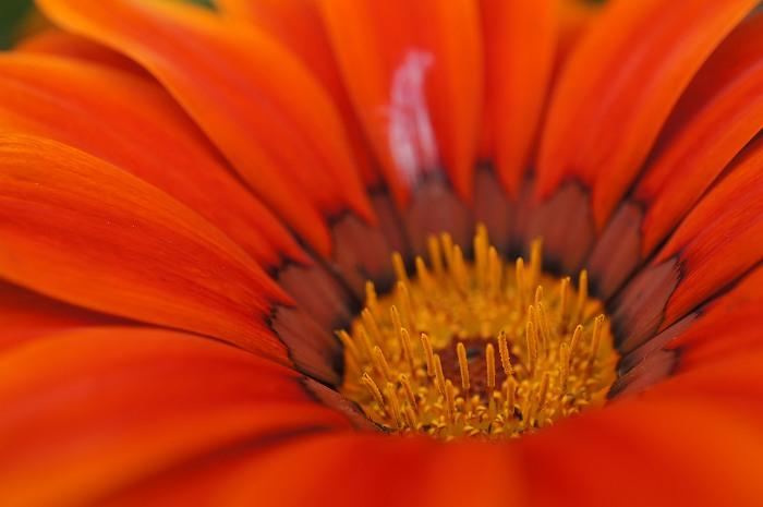 DSC02670花