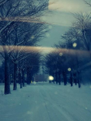 朝の雪景色1