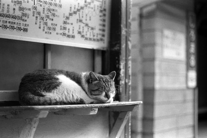 198712_白丸駅の猫
