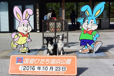 DSC_3568_20161023202028b36.jpg