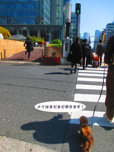 2016-3-tsukiji9.jpg