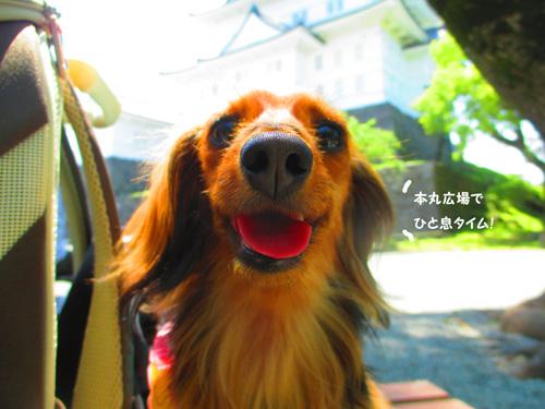 2016-5-odawara47.jpg