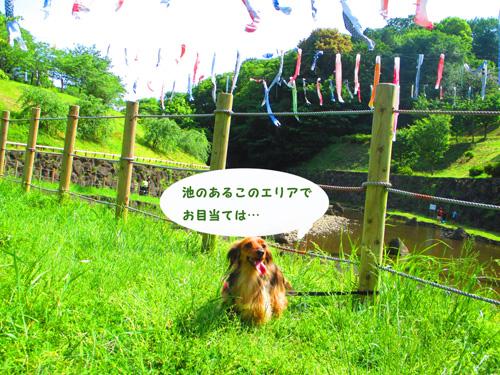 2016-5-satoyama10.jpg