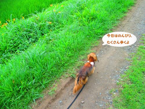 2016-7-satoyama18.jpg