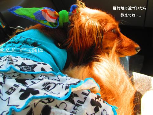 2016-8-asakusa2.jpg