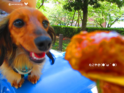 2016-8-asakusa20.jpg