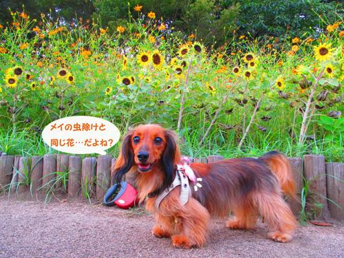 2016-satoyamasanpo20.jpg