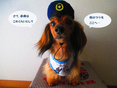 omawari-san11.jpg