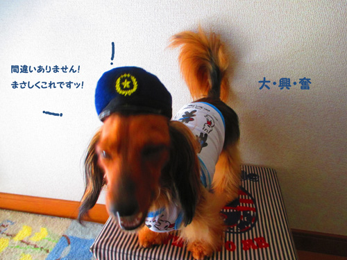omawari-san13.jpg